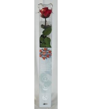 Rose stabilizzate amorosa con scatola