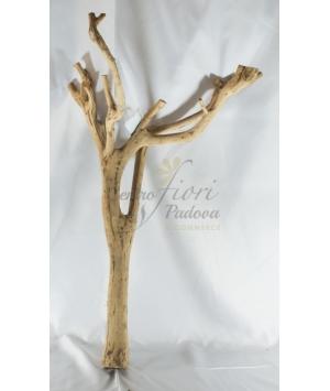 Wood Mangrowe