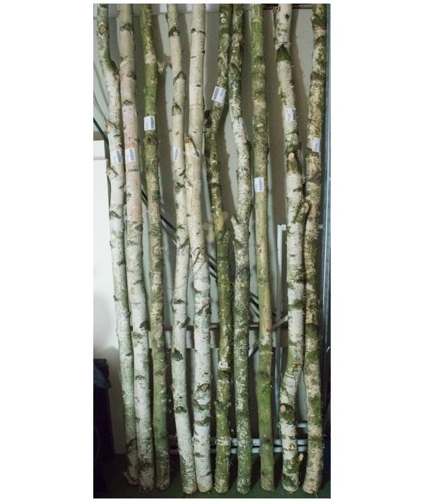 Tronchi betulla centro fiori padova - Rami decorativi legno ...
