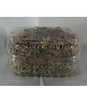 Moss Dry Tillandsia