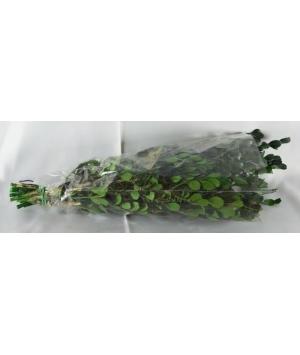 Buxus Green