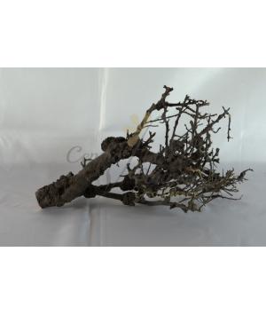 Juji Root