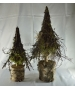 Tree Larix Moss