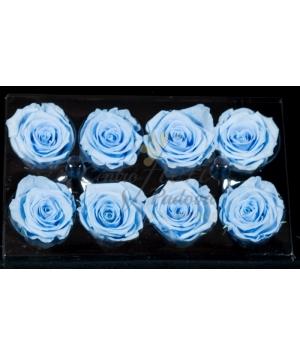 rose stabilizzate x8