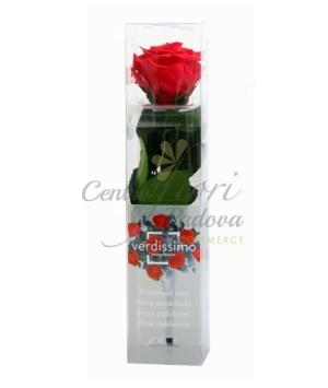Rose Stabilizzate mini amorosa