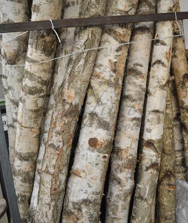 Tronchi di betulla per arredamento for Tronchi per arredamento