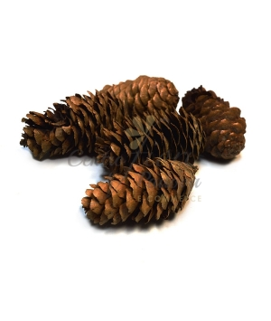 PINE CONE NATURAL/BIANCHI