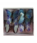 Butterfly Dawn Natural 8 cm
