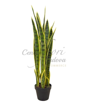 SANSEVIERIA ARTIFICIALE