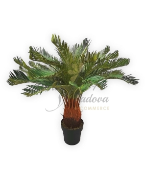CYCAS IN VASO ARTIFICIALE